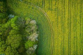 Inwestowanie w grunty - czy zakup ziemi się opłaca?