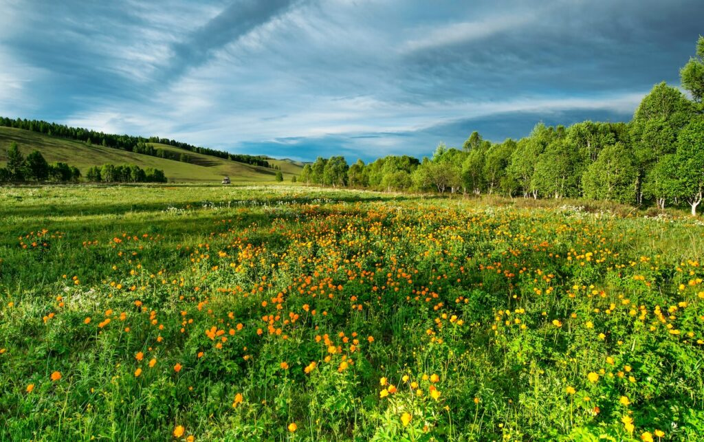 Inwestowanie w grunty - lokalizacja - gdzie kupić działkę